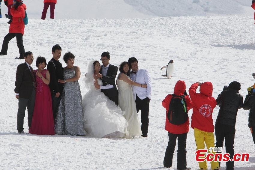 Chinese tourists increasingly love Antarctic