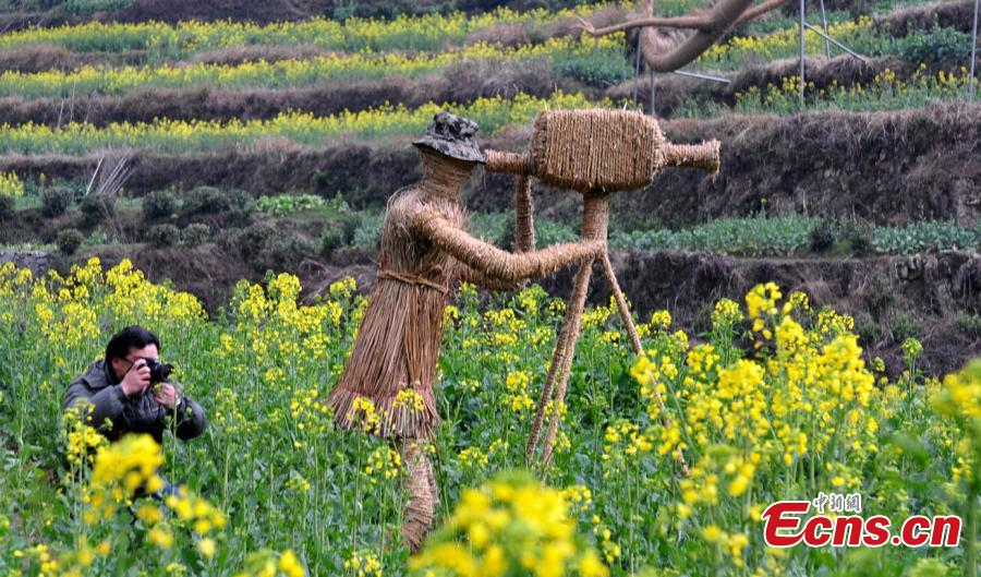 Farmers build scarecrow zoo amongst rapeseed fields