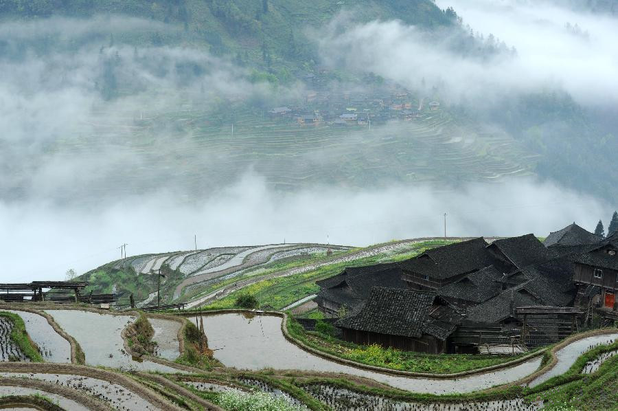 Scenery of terraced fields in China's Guizhou