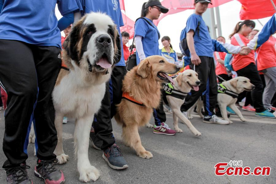 Guide dogs play a role in marathon