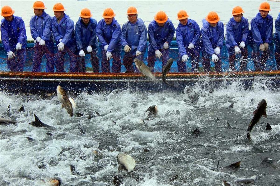 The Giant Net Fishing show opens in Qiandao Lake