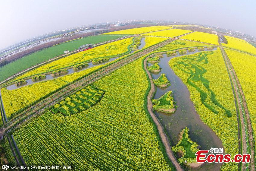 'Silk Road' captured in planted field