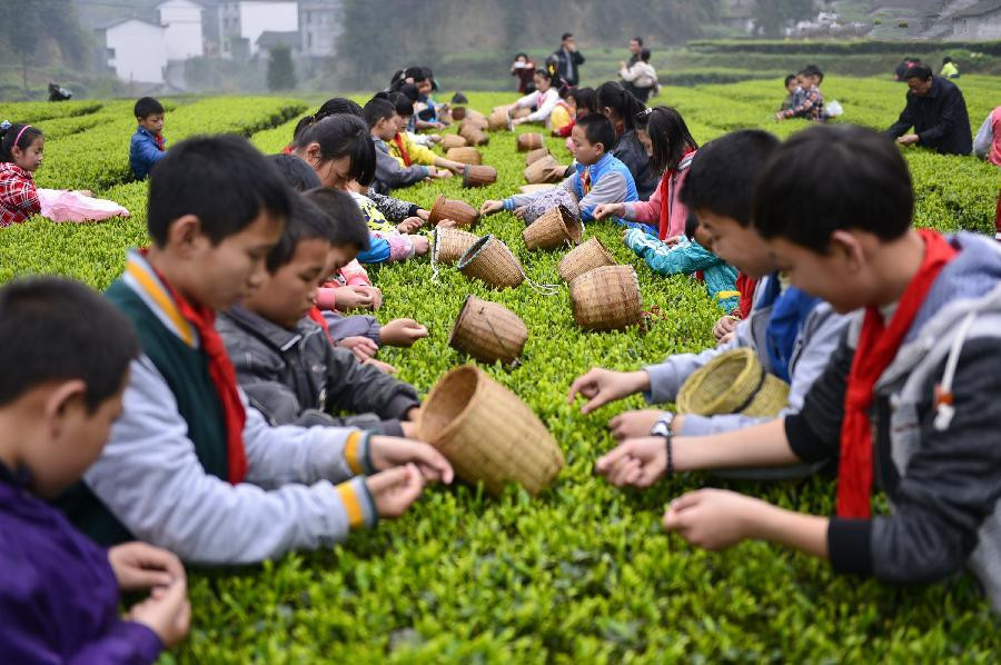 Children pick tea leaves in farm vacation in China's Hubei