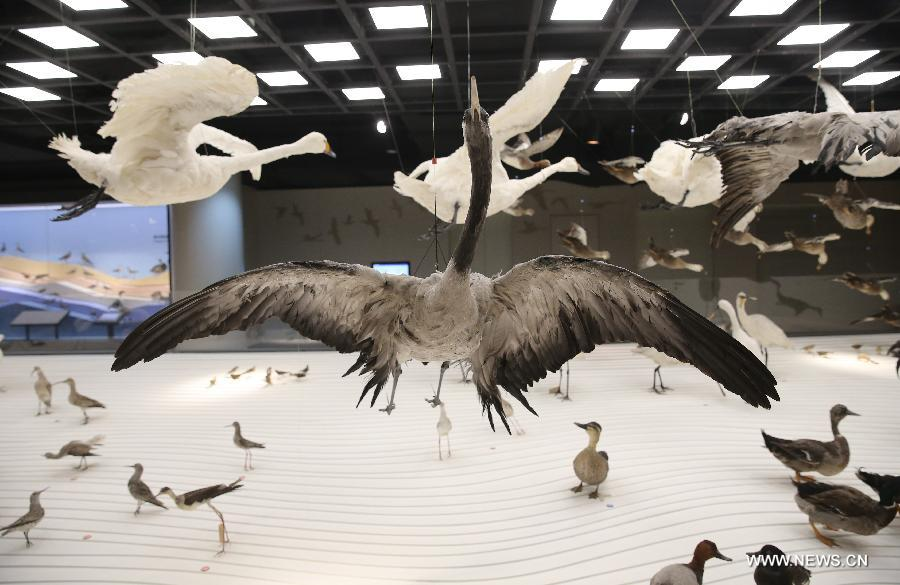 Natural History Museum opens in Shanghai