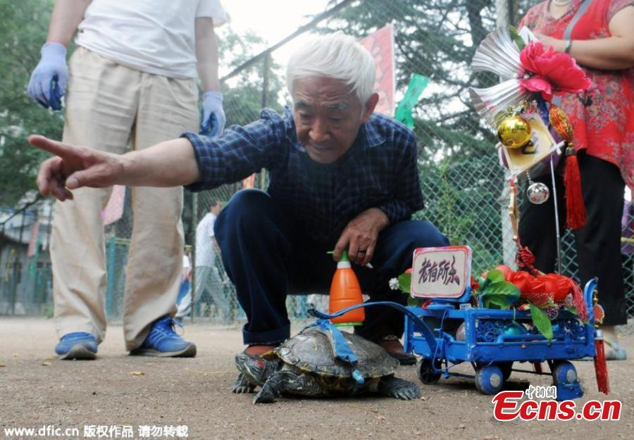 Old man walks turtle as pet at park