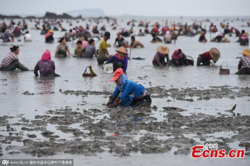 2,000 residents loot clams in East China