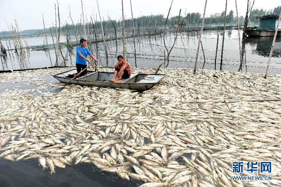 Fish death in polluted lake costs heavily