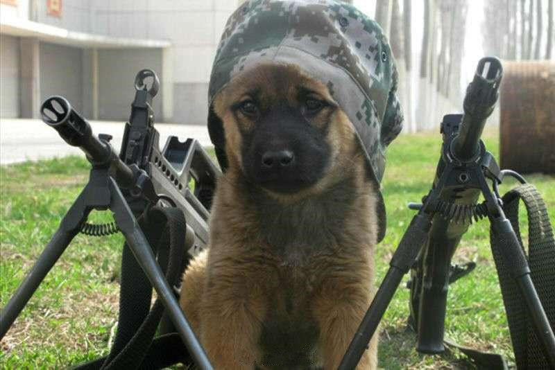 Military working dogs: When I was a little doggy