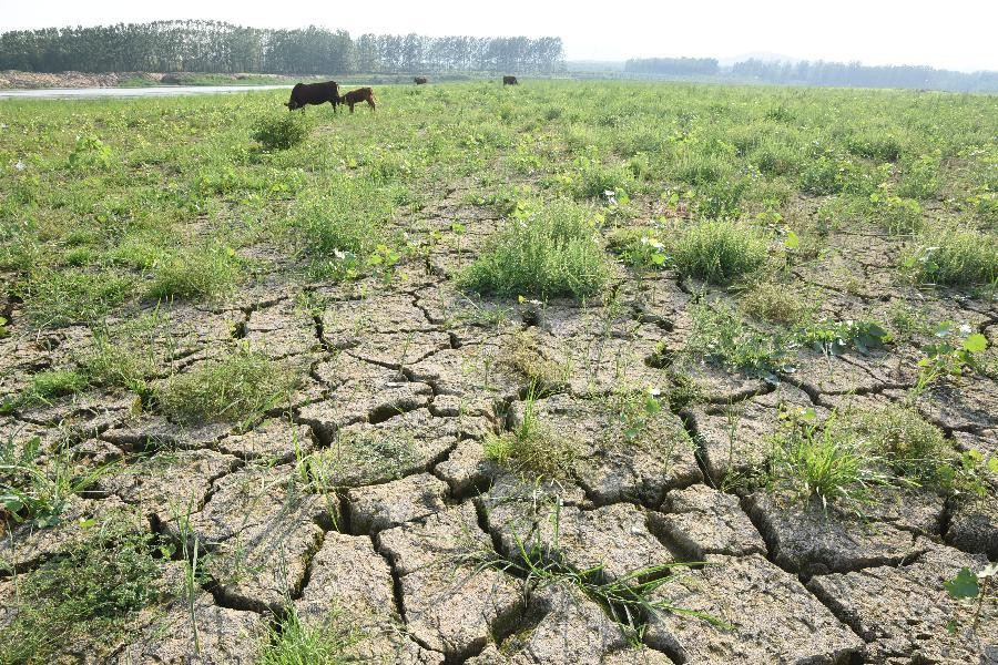 Shandong undergoes severe drought