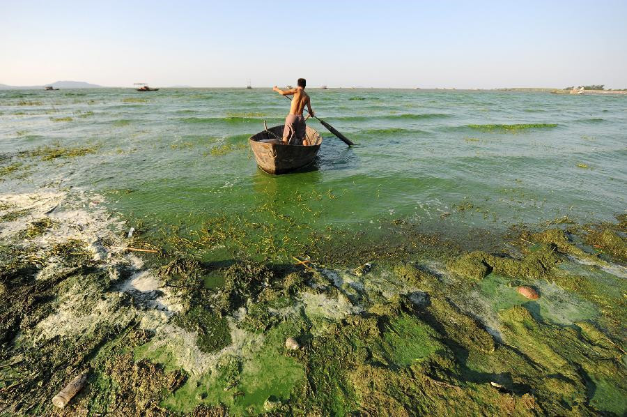 Blue-green algae spreads due to warmer temperature in Chaohu Lake