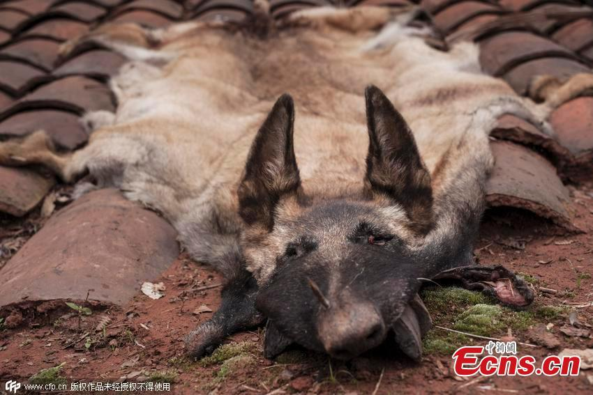 Villagers claim traces of wolves, leopards in SW China