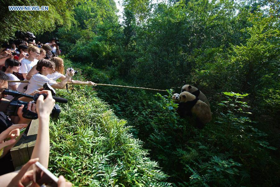 12 European panda fans travel to China's Sichuan