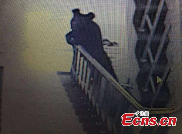 Bear shot dead after breaking into school in NE China