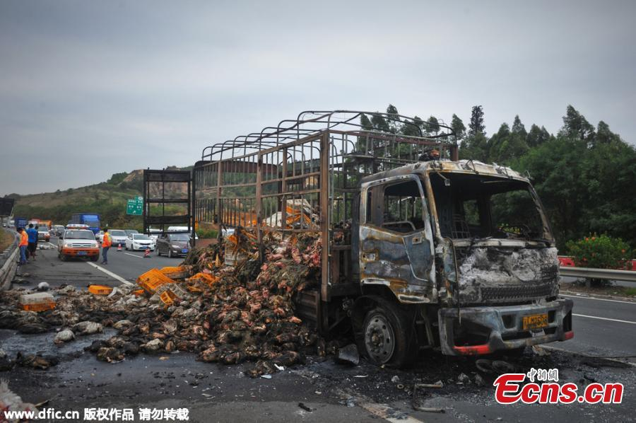 2,000 live ducks turned into roast ducks after truck catches fire