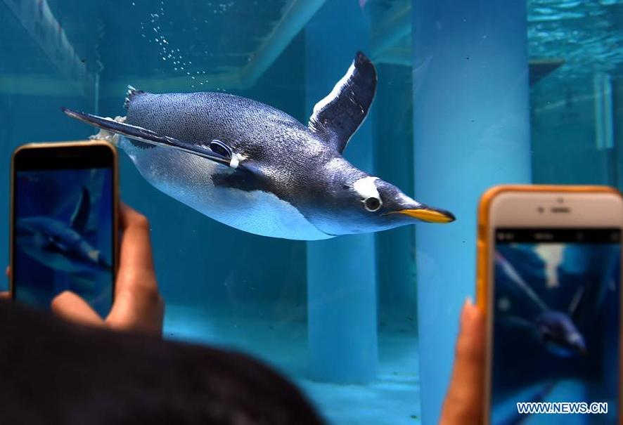 Penguin science exhibition held in S China