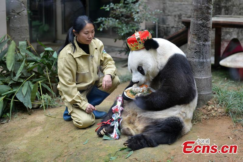 Oldest giant panda Basi celebrates 35th birthday