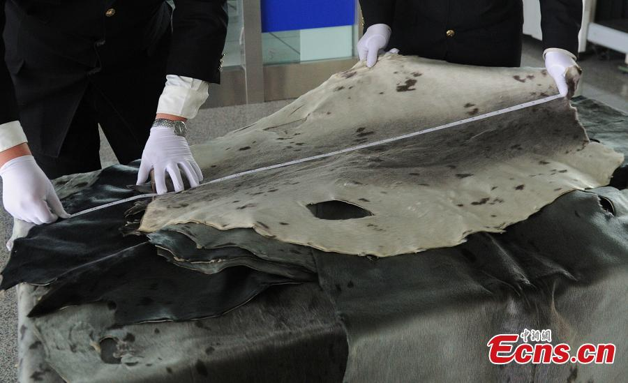 Chinese customs seize large haul of illegal seal skins