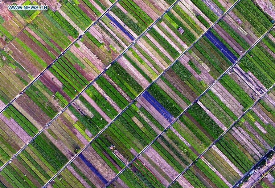 Aerial view of vegetable fields in China's Nanning