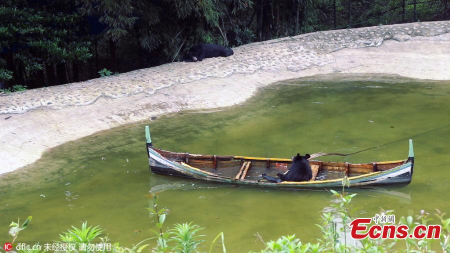 Black bear fails to row canoe