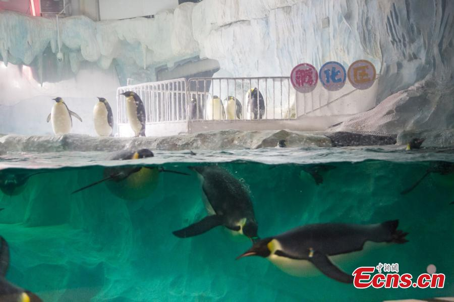 Southern theme park proud to have seven emperor penguin eggs