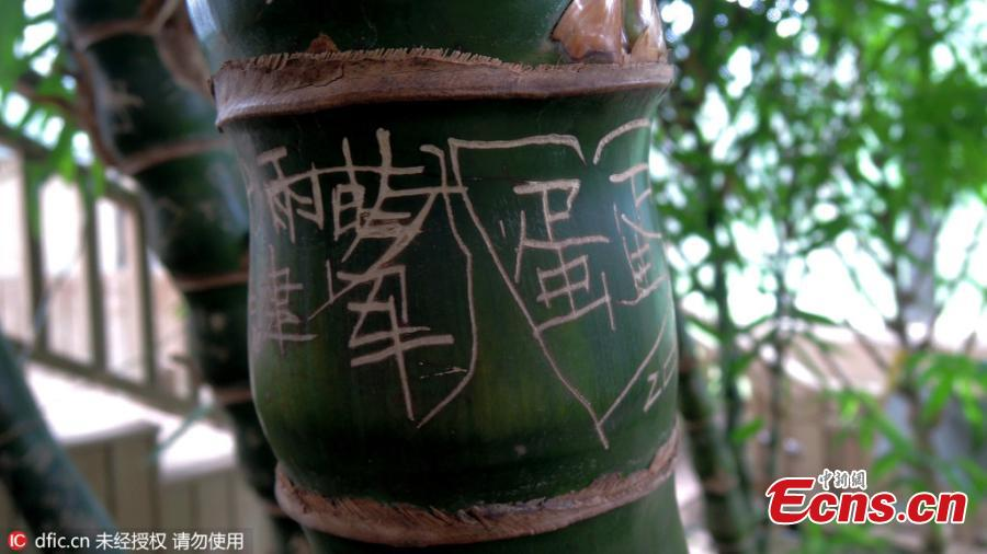 Vandals etch love vows on bamboo