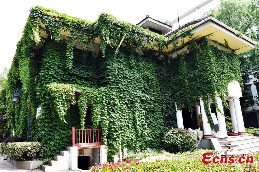 Climbing plant shields Nanjing University in summer