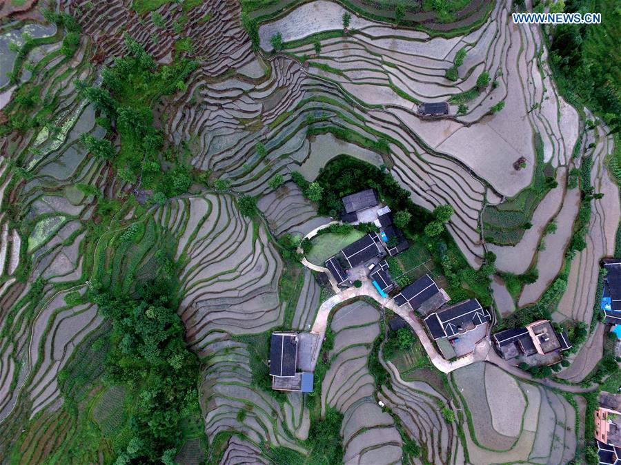 Terraced fields in SW China