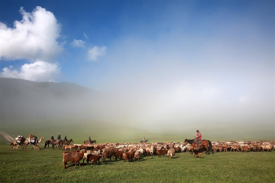 Livestock transferred to summer pastures in Xinjiang