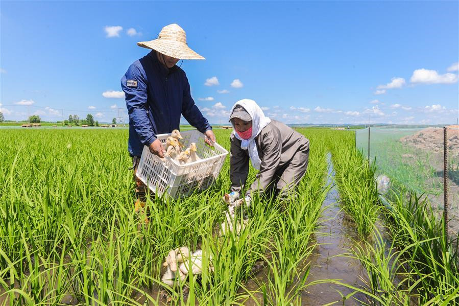 Eco-friendly farming system introduced to NE China