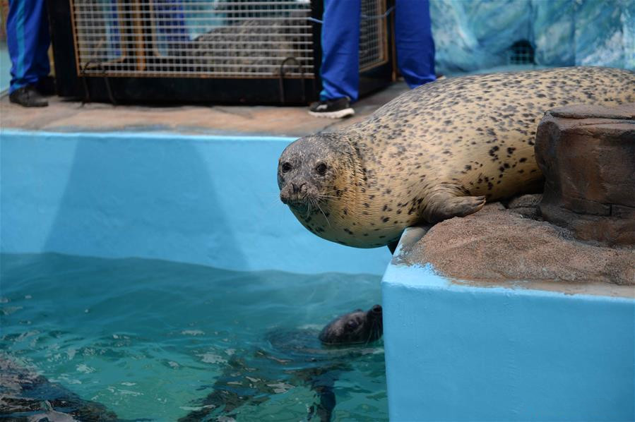 6 newly-arrived seals make their public debut in Harbin