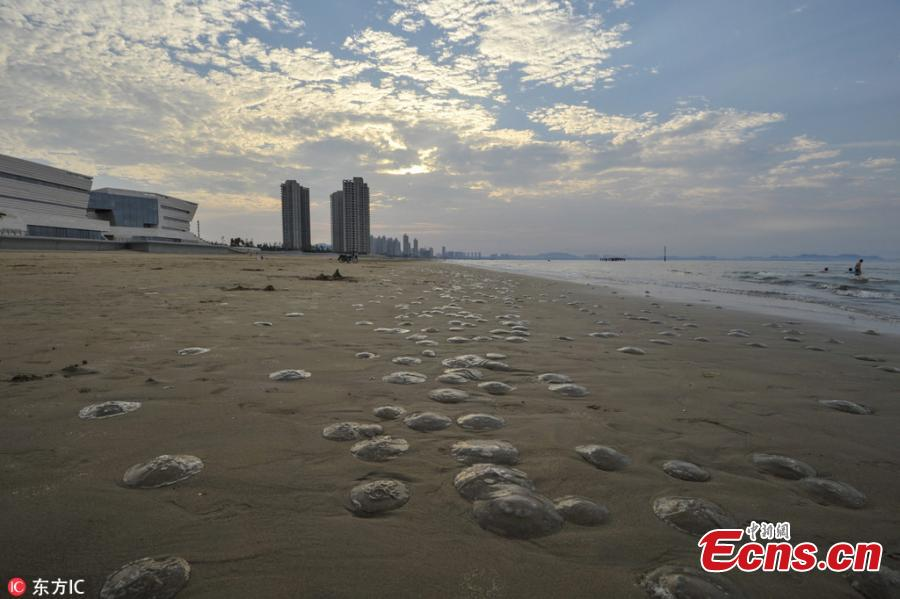 Eastern beach littered with jellyfish