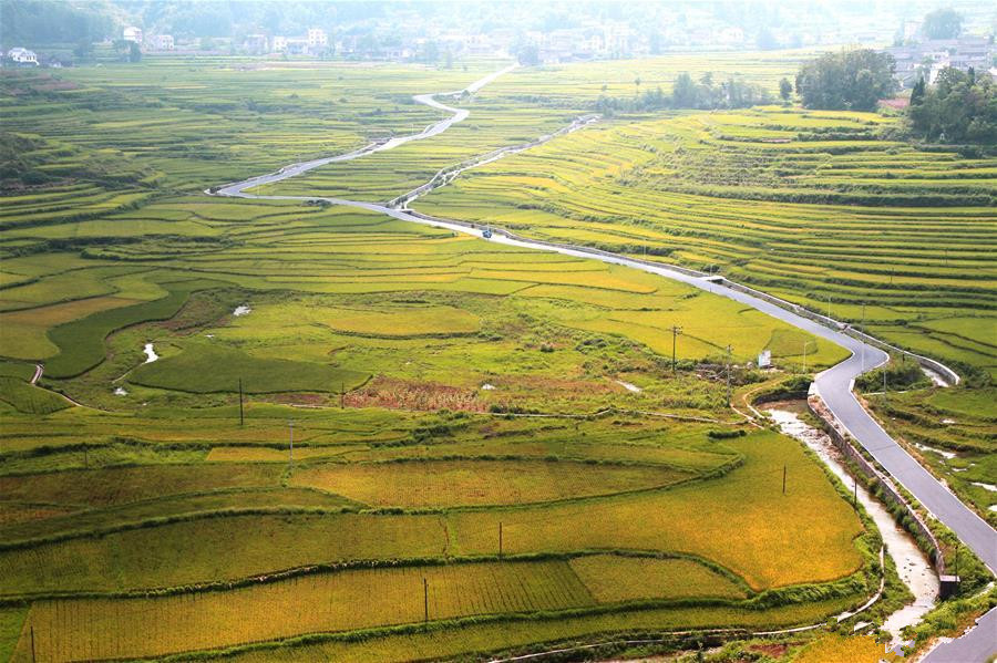 Paddy fields seen in Hunan