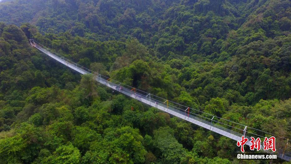 Glass bridge opens in primeval forest for thrill-seekers