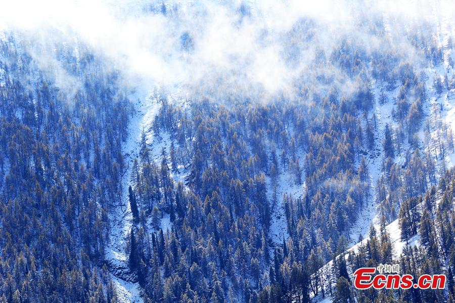 NW China city has first snow