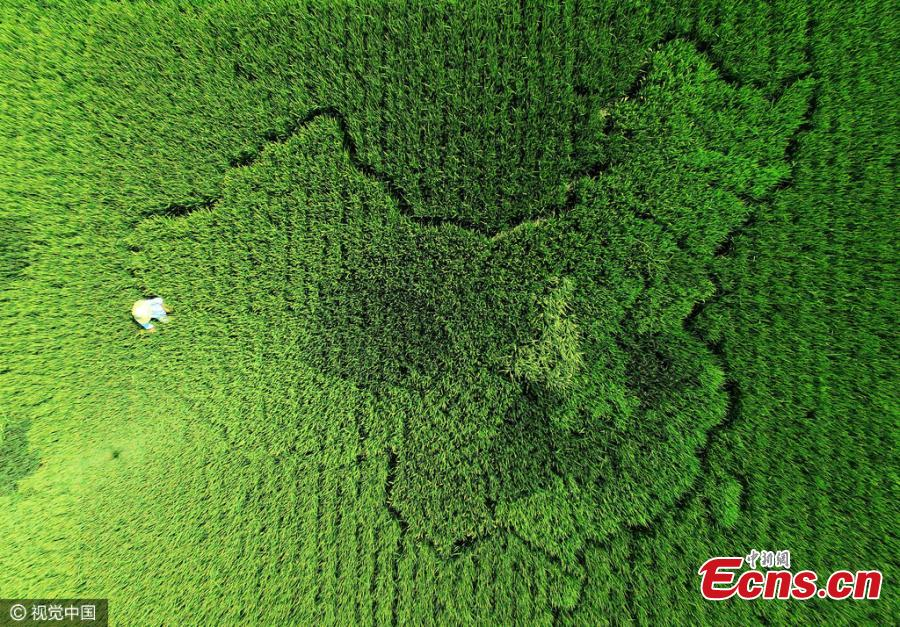 Elderly man creates map of China with colorful rice in Shanghai