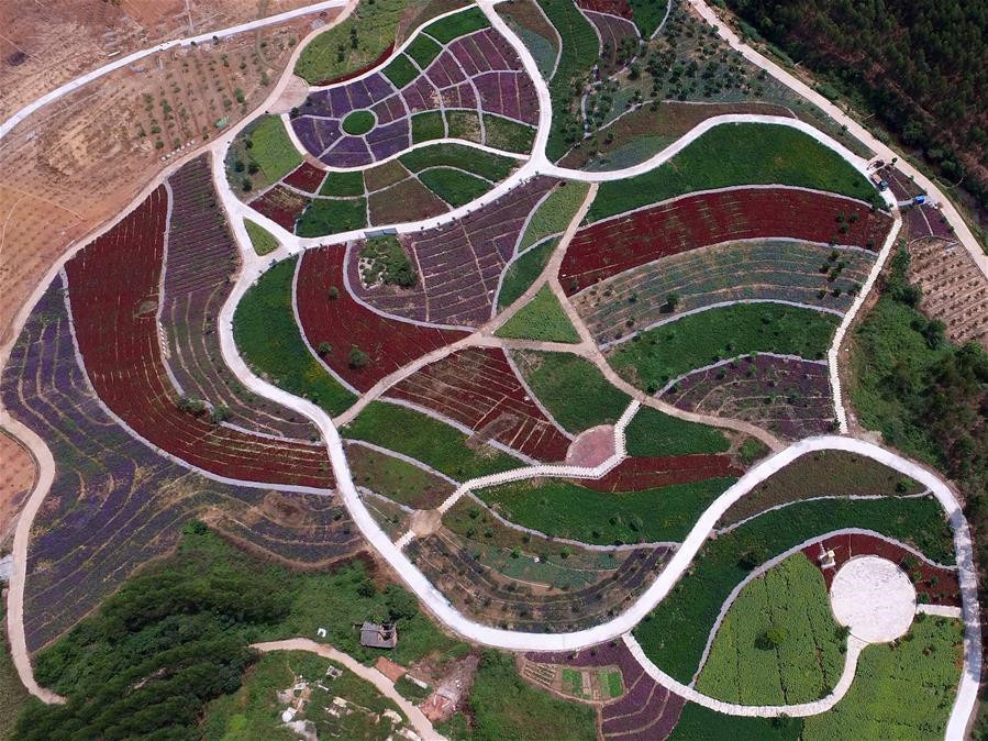 Aerial view of flower fields by Huayu Lake of Nanning