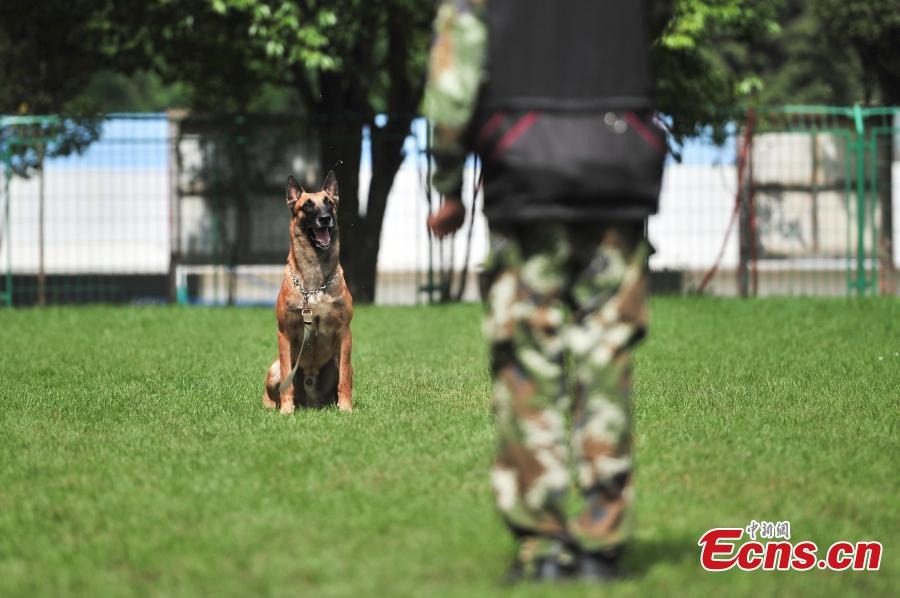 Rescue dogs undertake annual training in Kunming