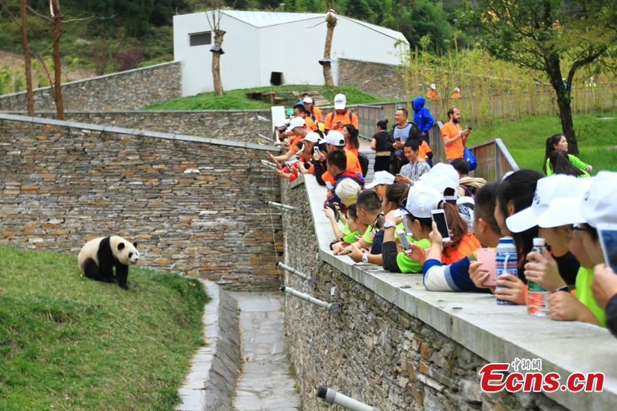 300 int'l fans join 23-km trek to find giant pandas