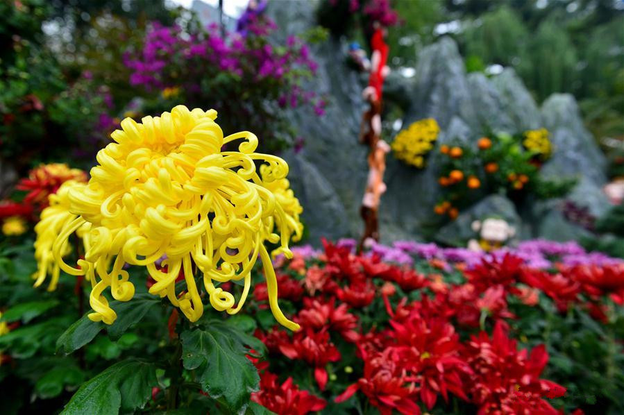 Chrysanthemum blossoms displayed at Baotu Spring Park