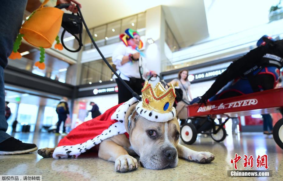 Dogs put on Halloween costumes to help relieve stress at L.A. airport