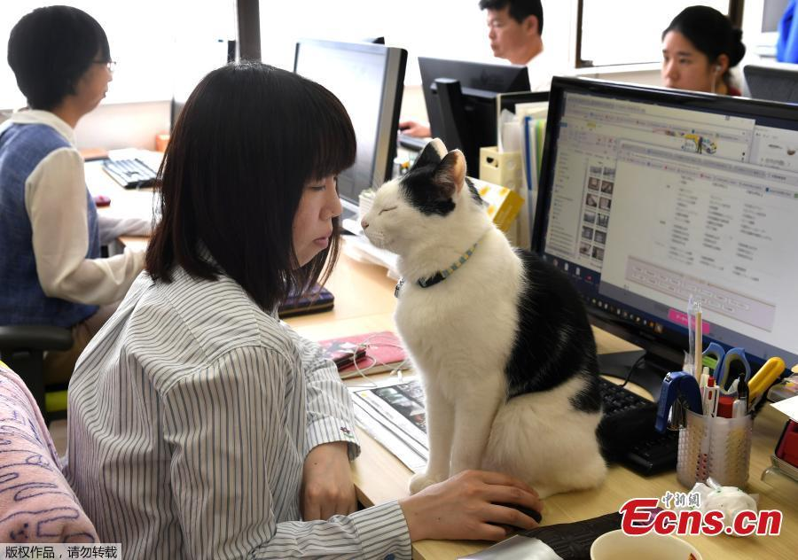 Cats counter stress at Tokyo firm