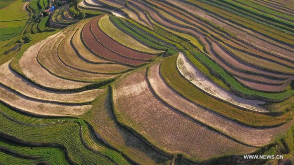 Scenery of terraces in NW China's Ningxia