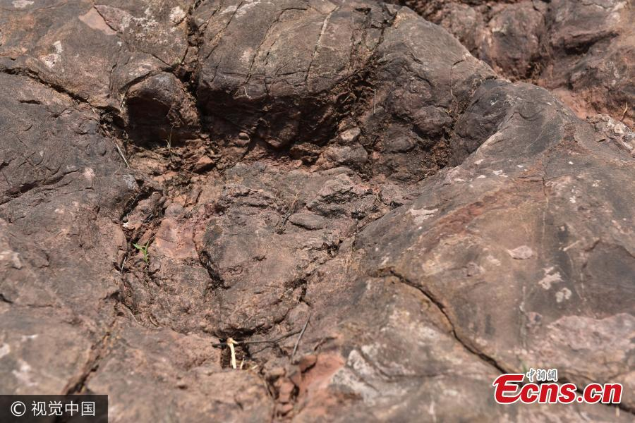 More than 200 dinosaur footprints found by chance in Guizhou