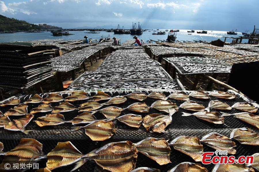 Drying fish in Shenzhen's marine production hub