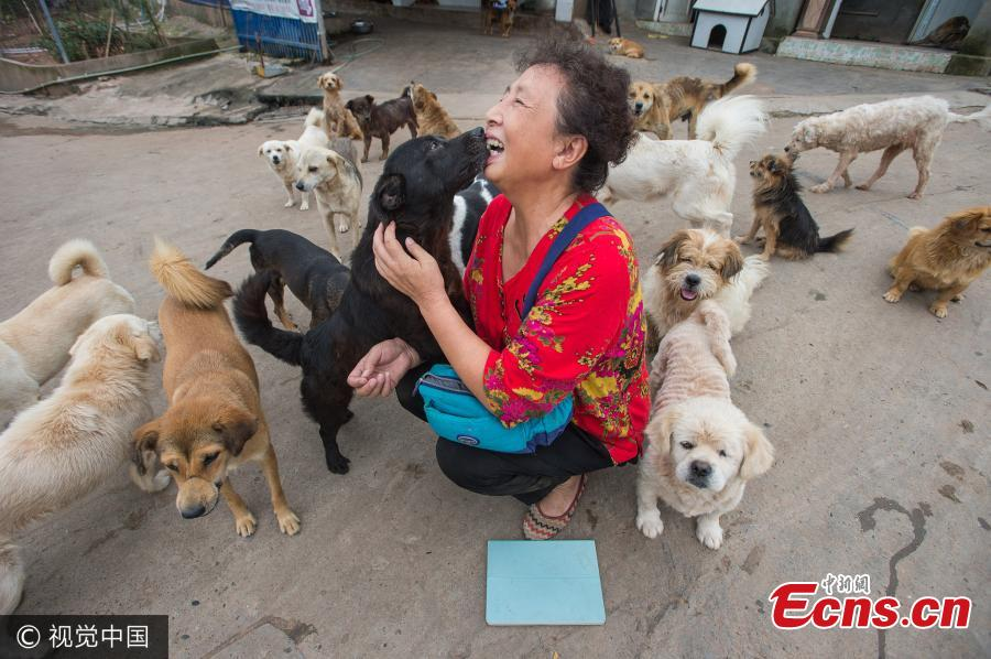 Woman struggling to keep 5,000 dogs and 300 cats