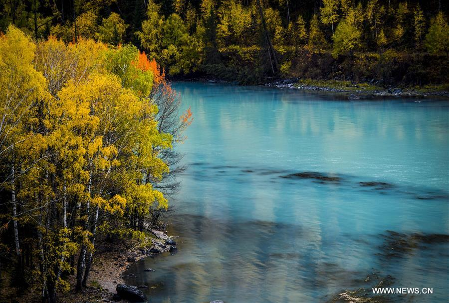 Autumn scenery of Kanas scenic area in Xinjiang