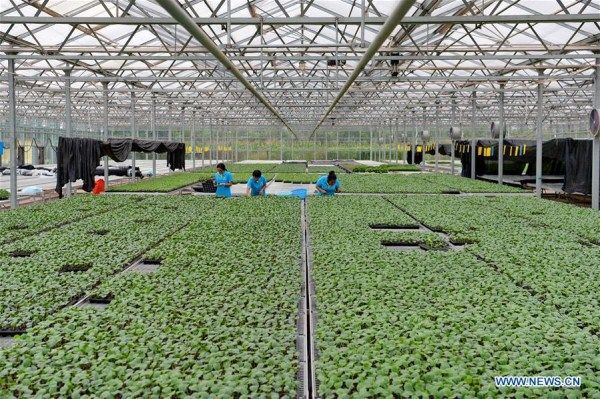 Over 1,333 hectares of vegetable, fruit bases built in N China's Hebei