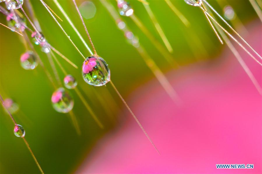 Amazing dewdrops on garden plants