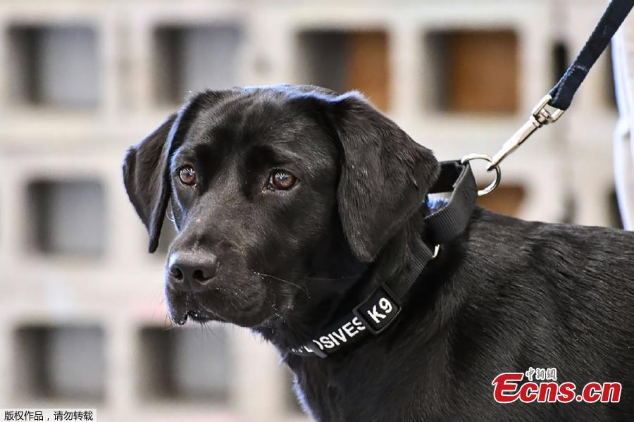 Dog loses interest in bomb sniffing, booted from CIA