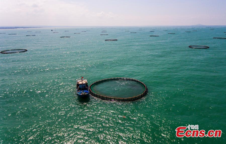 Asia's largest deep-water cage farming base in Hainan